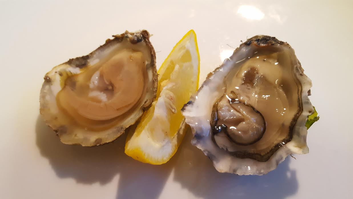 Native Oyster vs Rock Oyster